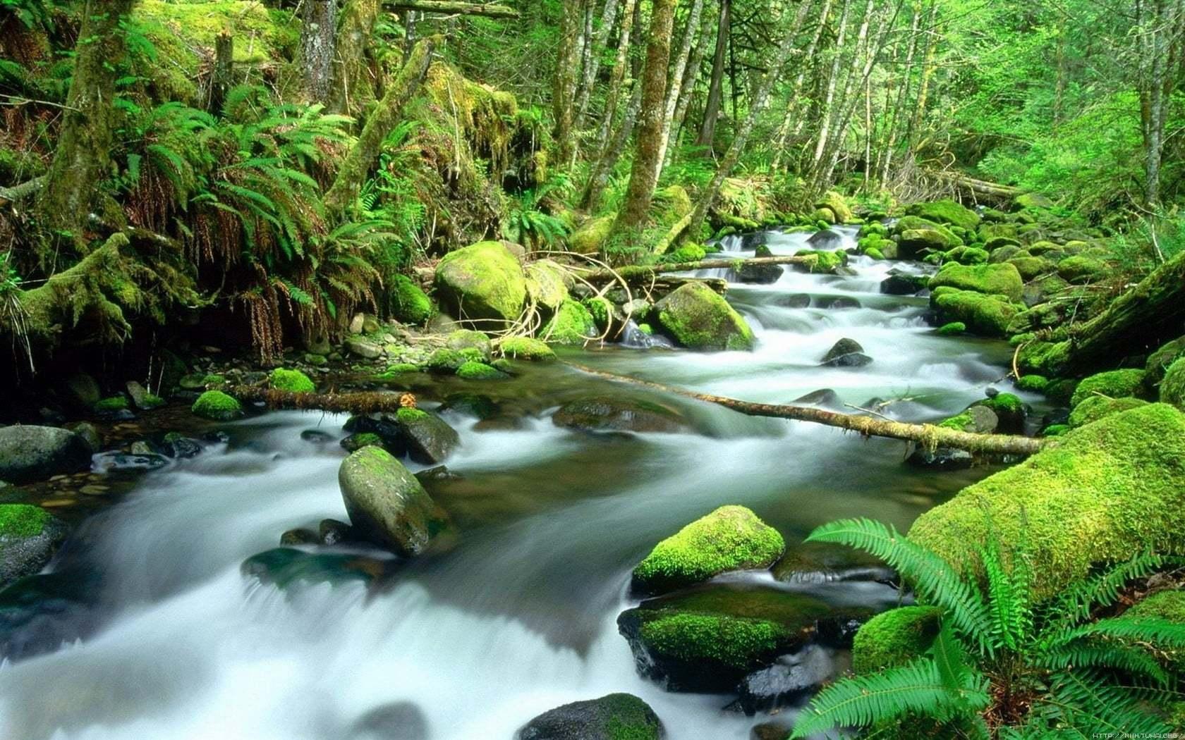 Su ve Yeşil