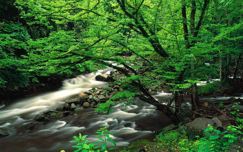 Yeşil Su