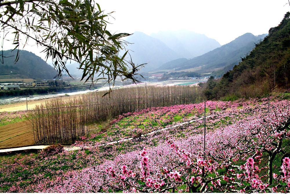 Pembe kır çiçeği