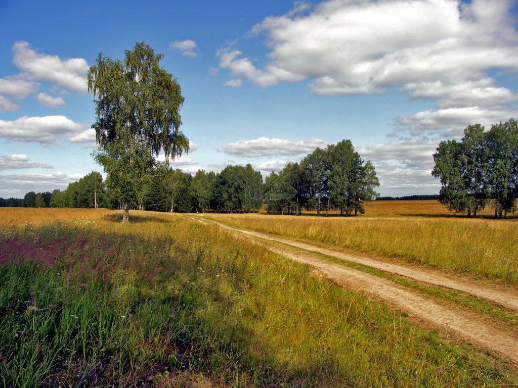 Patika yol ve doğa