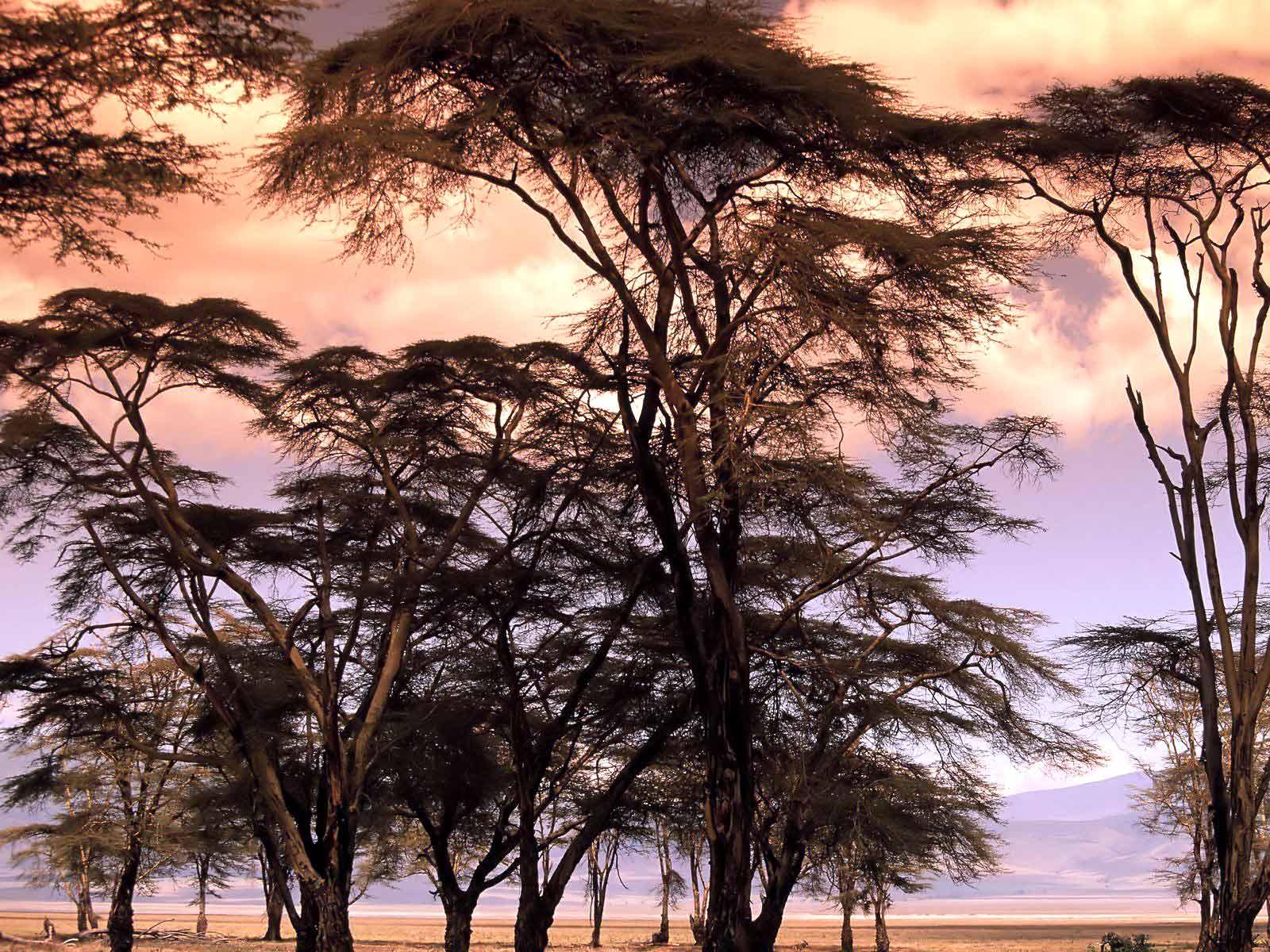 Afrika'dan pembe manzara