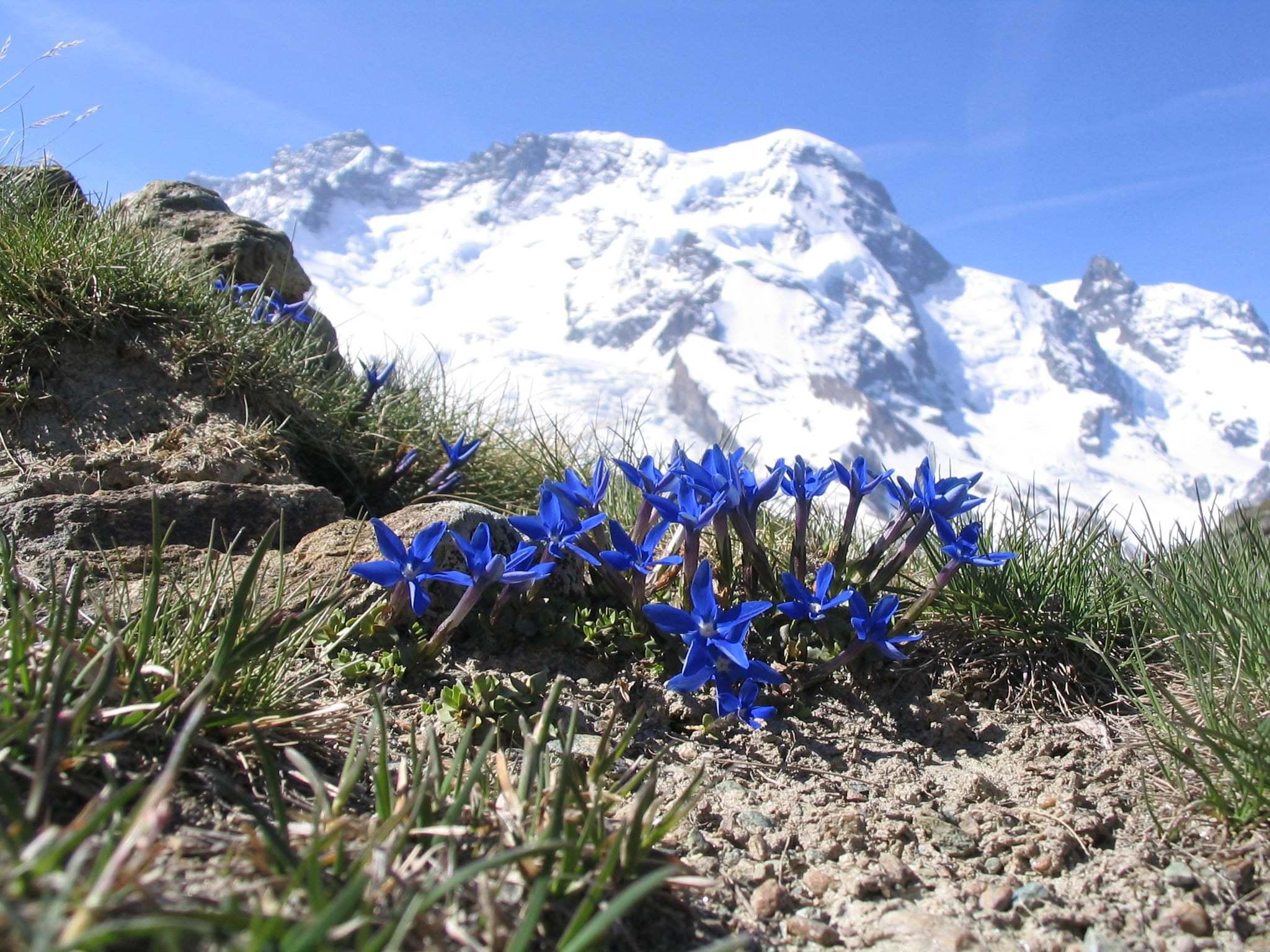 Karlı Alp Dağları Manzarası