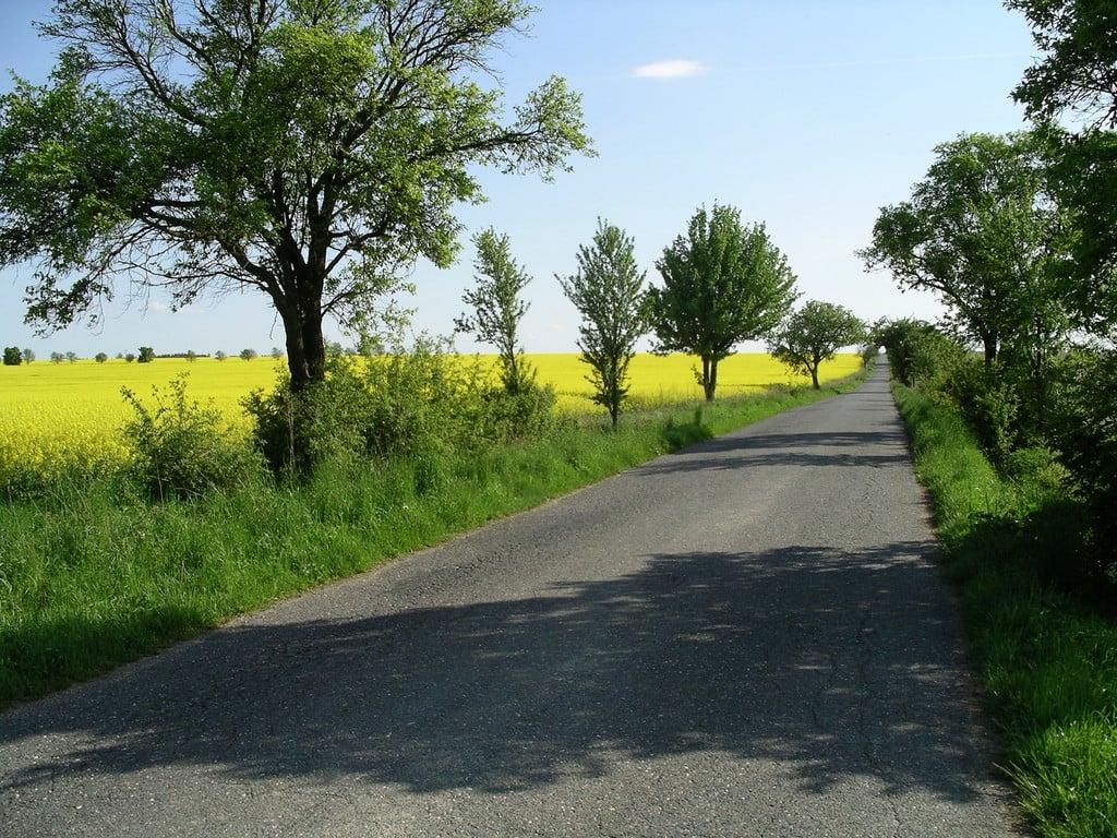 Ağaçlar arasında yol
