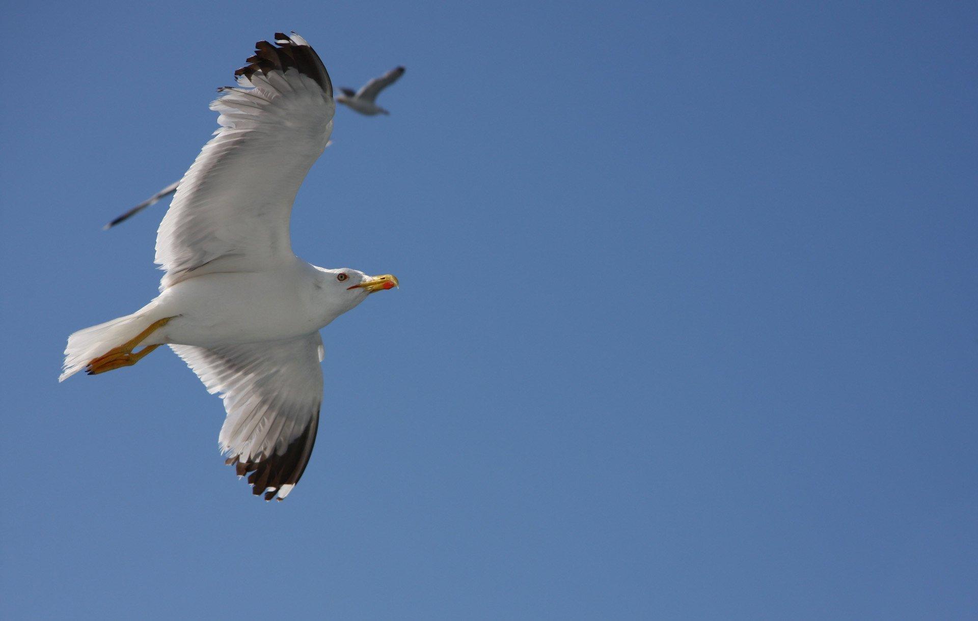 martı uçuşu