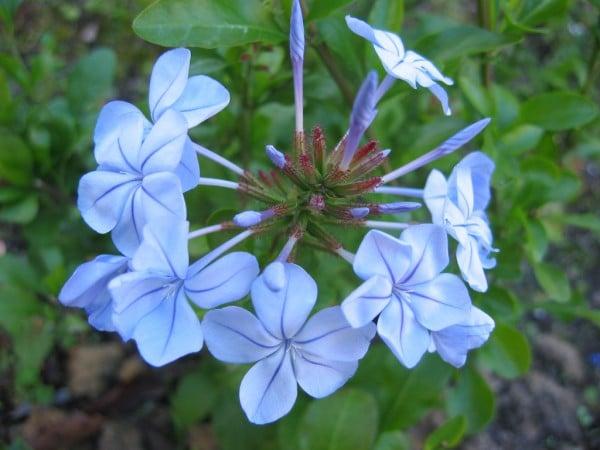 mavi çiçek fotoğrafı