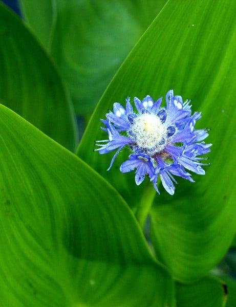 mavi çiçek görüntüsü