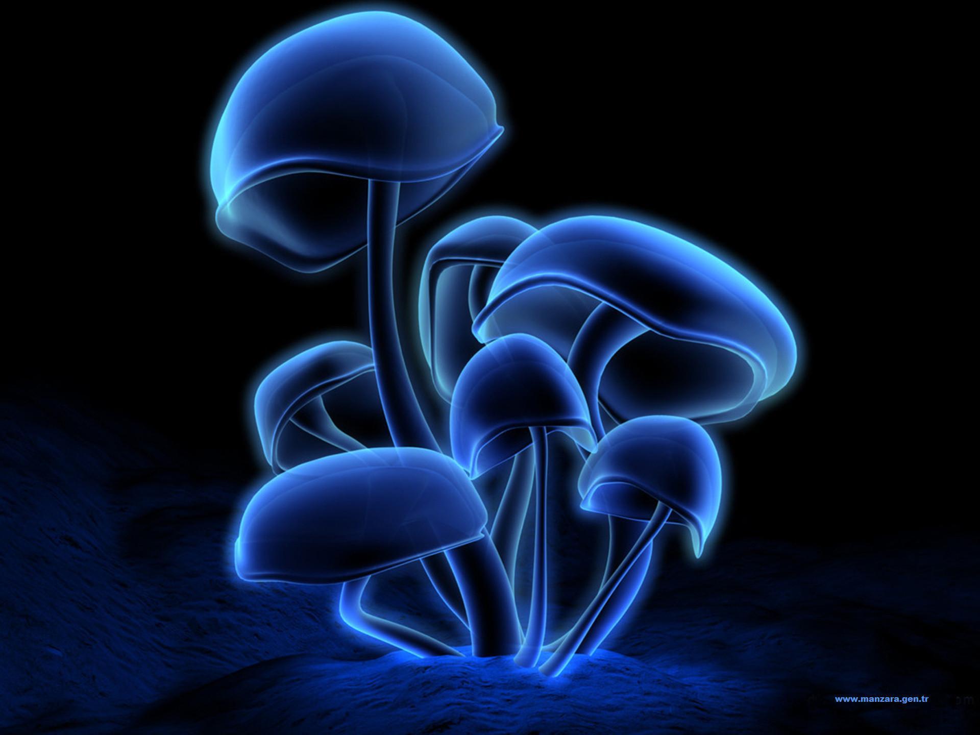 Mavi 3d mantar