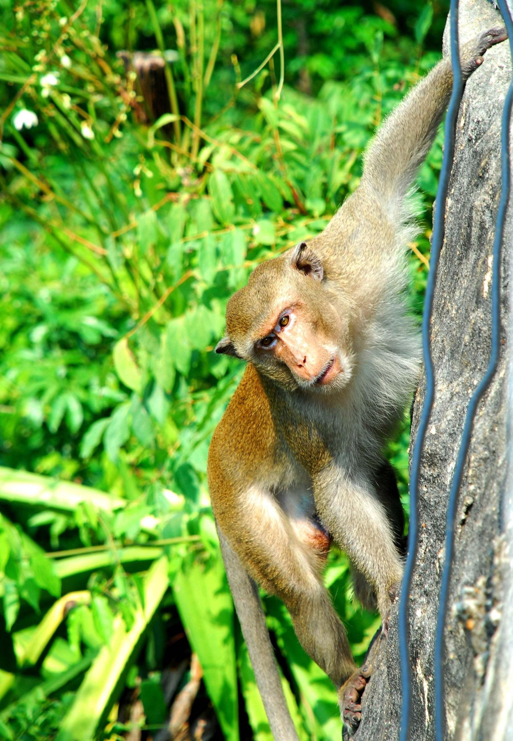 maymun fotoğrafları – 2