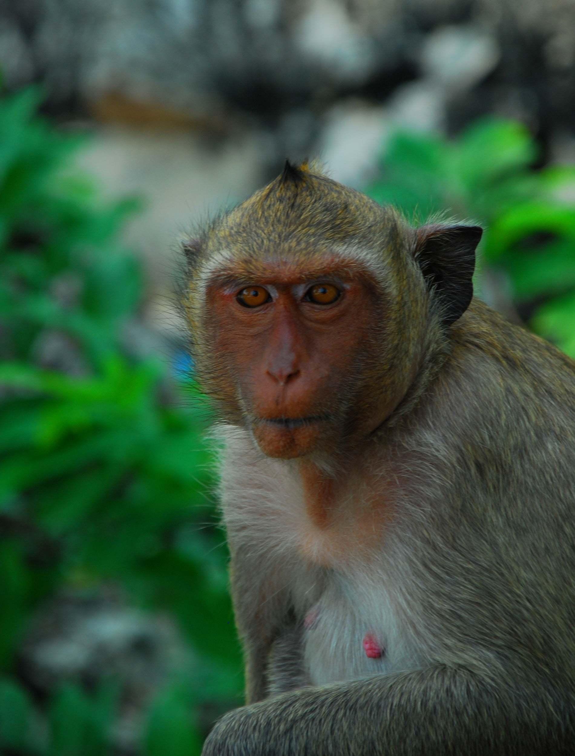 maymun fotoğrafları – 3