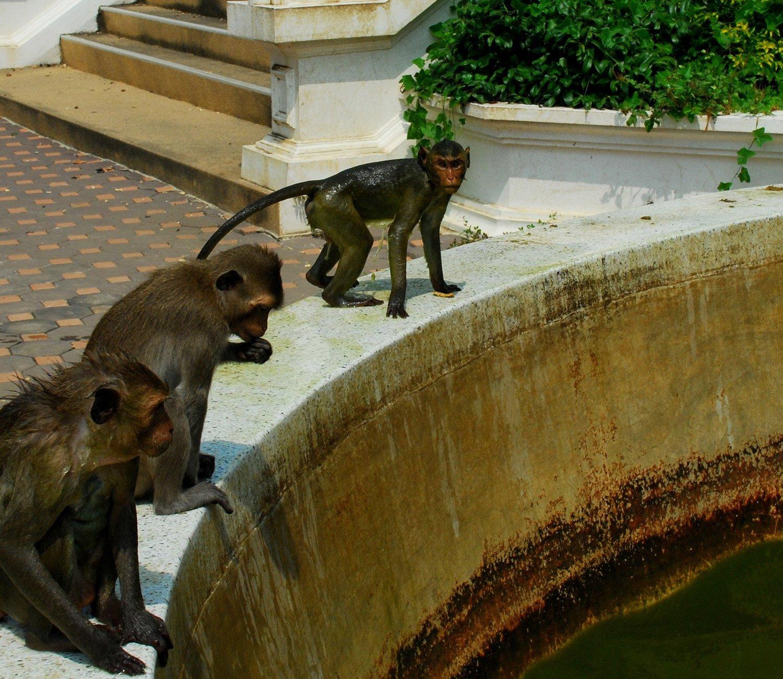maymun görüntüleri