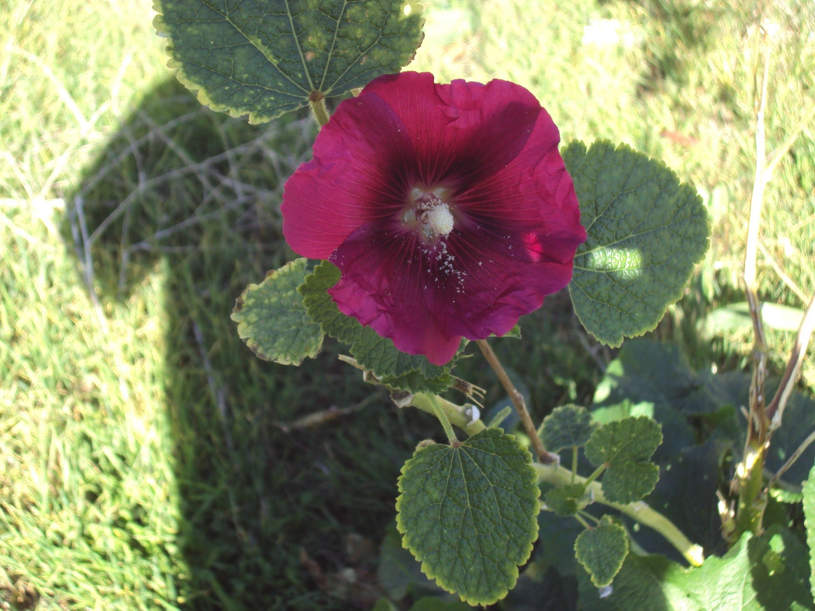 mor çiçek – 2