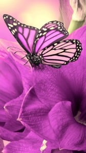mor çiçek ve kelebek 1080x1920