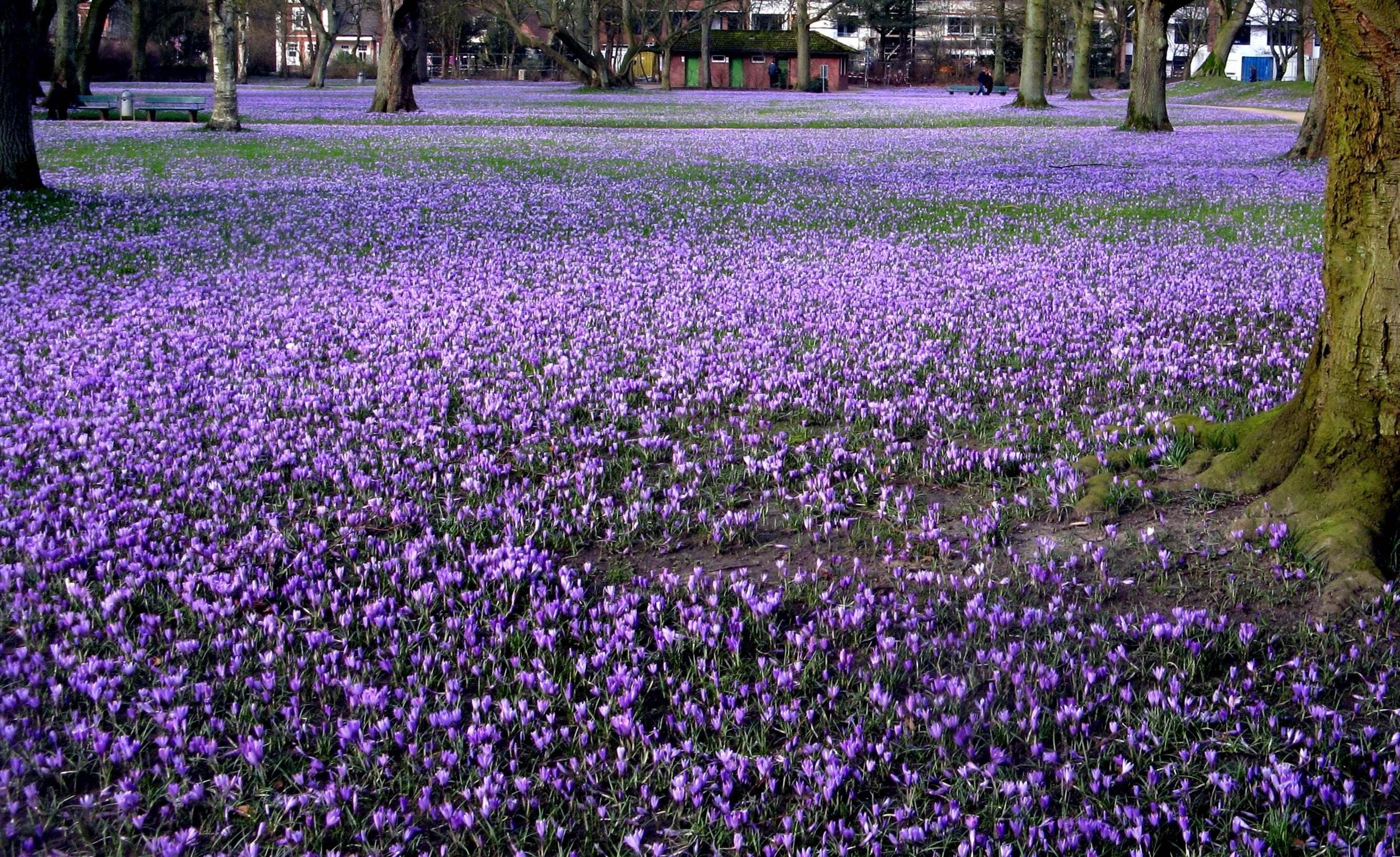 Çiçekli manzaralar-50