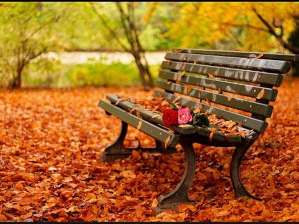sonbahar'dan bir görünüm