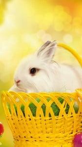 mutlu tavşan 1080x1920