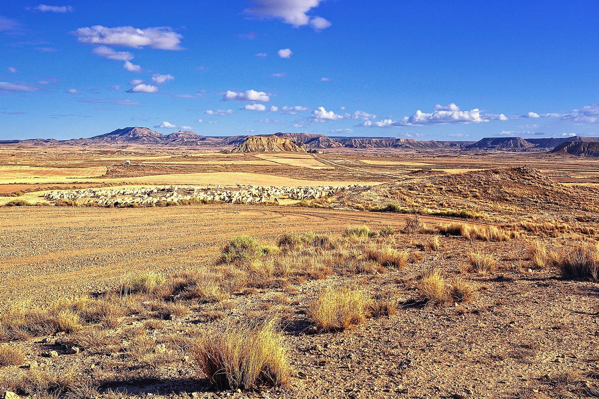 navarra arazi ve koyunlar