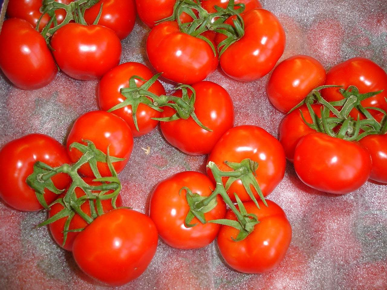 organik domates
