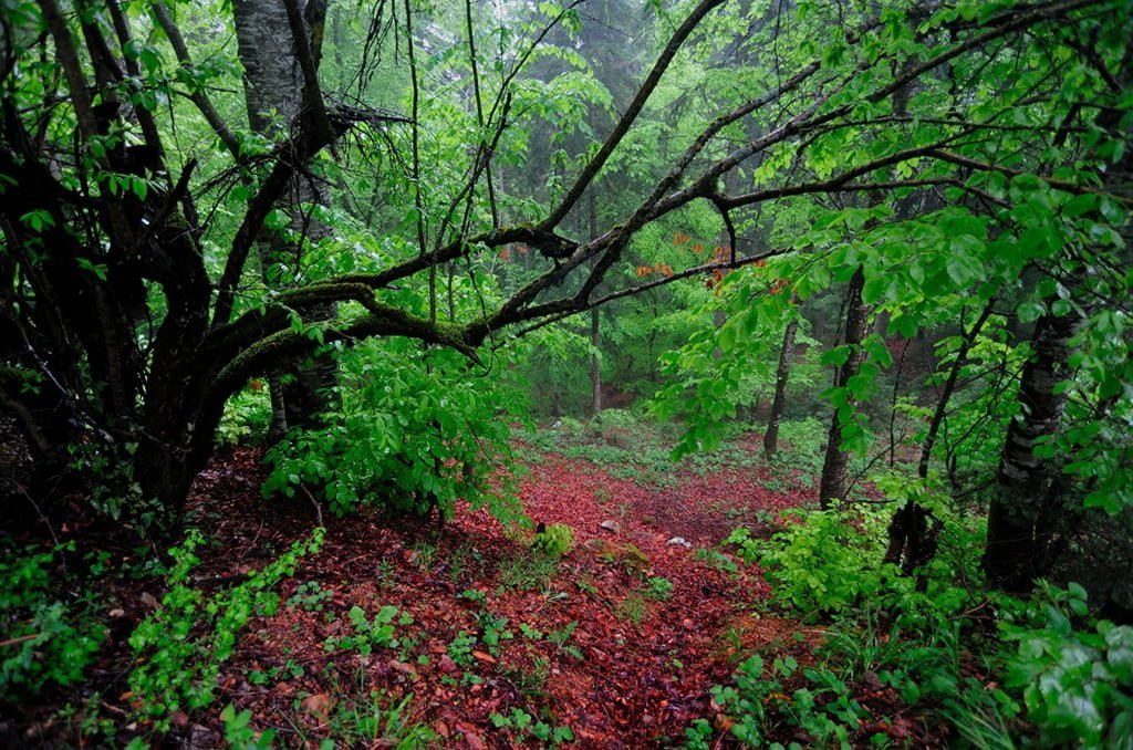 orman fotoğrafları