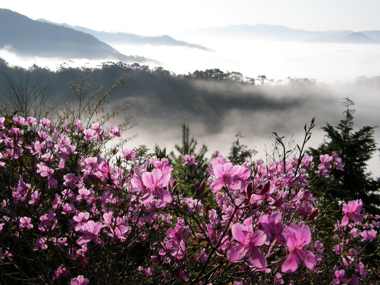 Çiçekli manzaralar-80