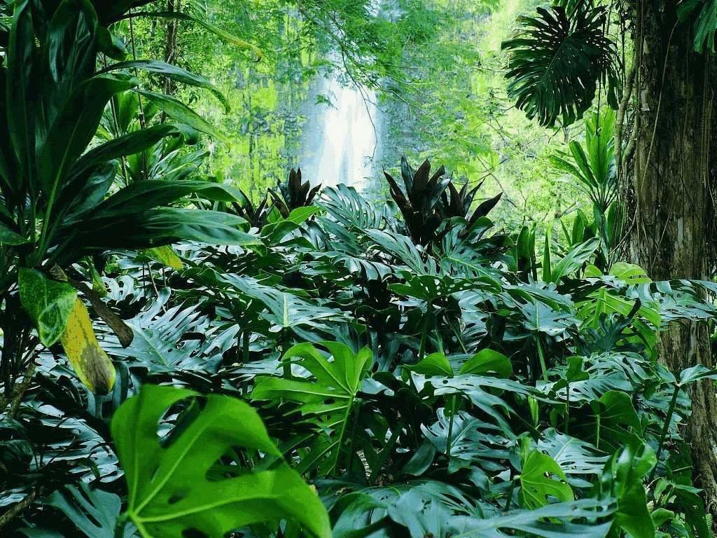 orman resimleri – 5