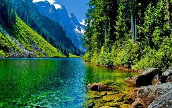 orman ve göl manzarası