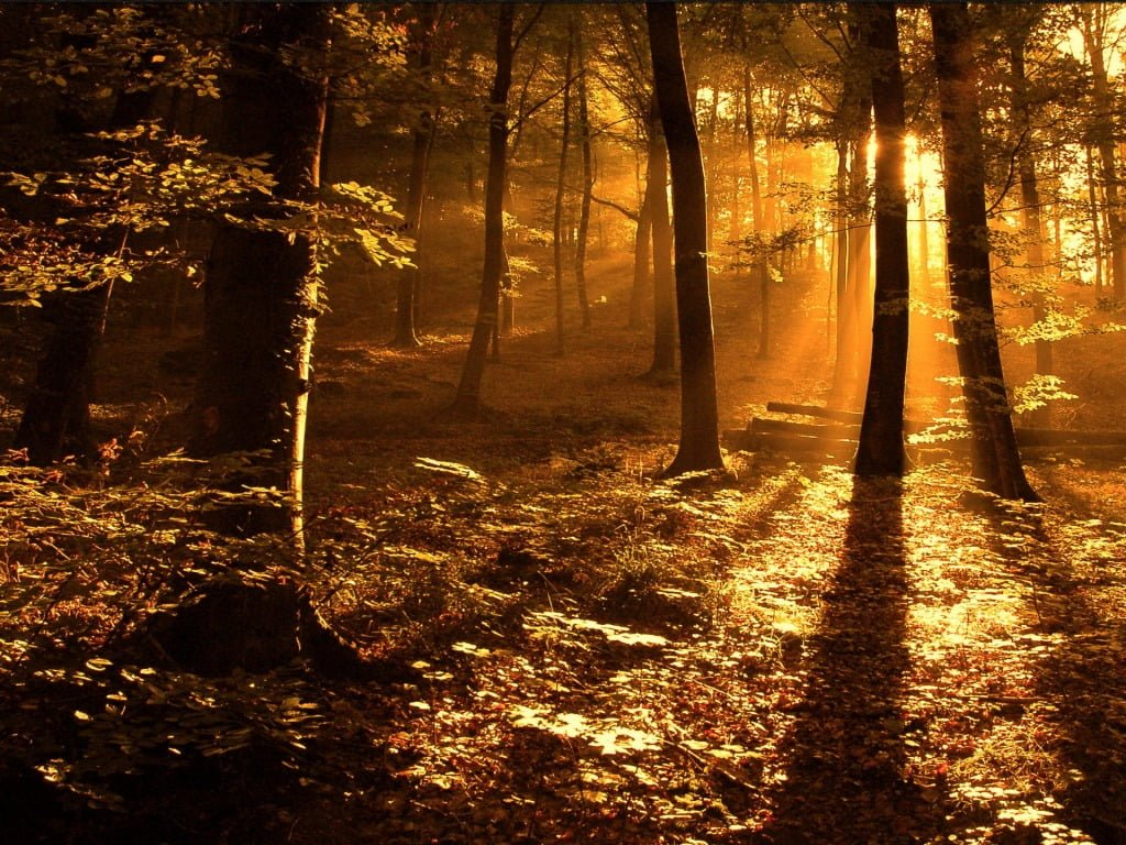 orman ve güneş