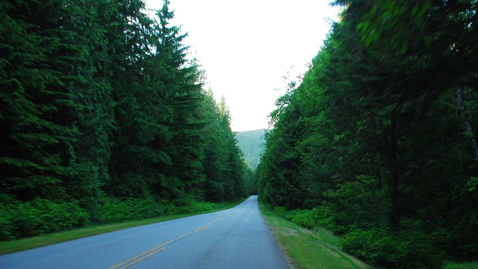 ormanlı yol