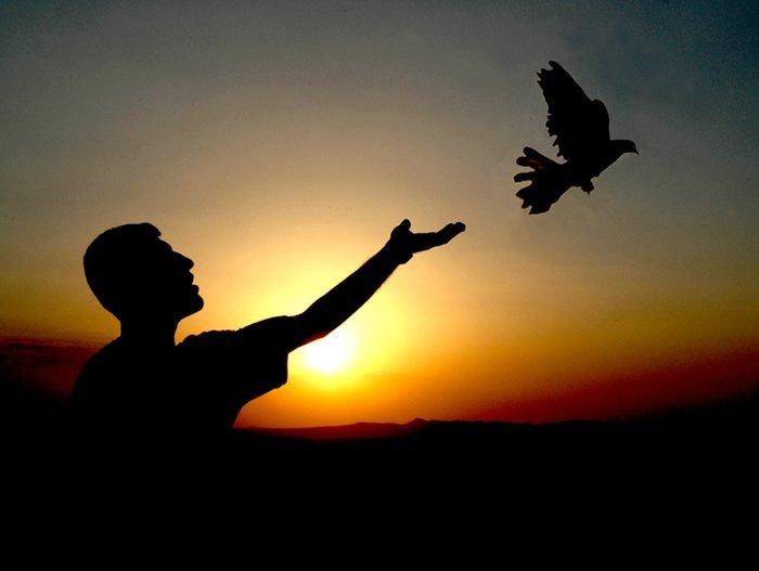 özgürlük kuşu