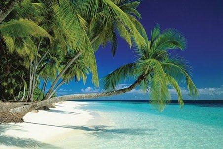 Palmiyeler ve Deniz