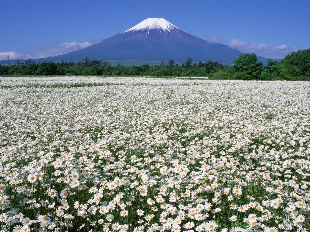 Çiçekli manzaralar-56