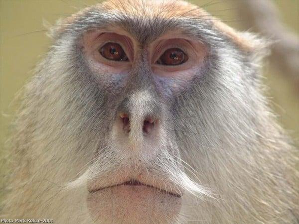 maymun fotoğrafları