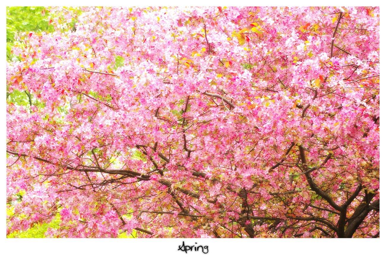 Çiçekler – 102