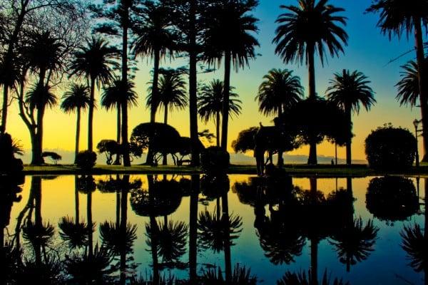 portekiz ağaçlar