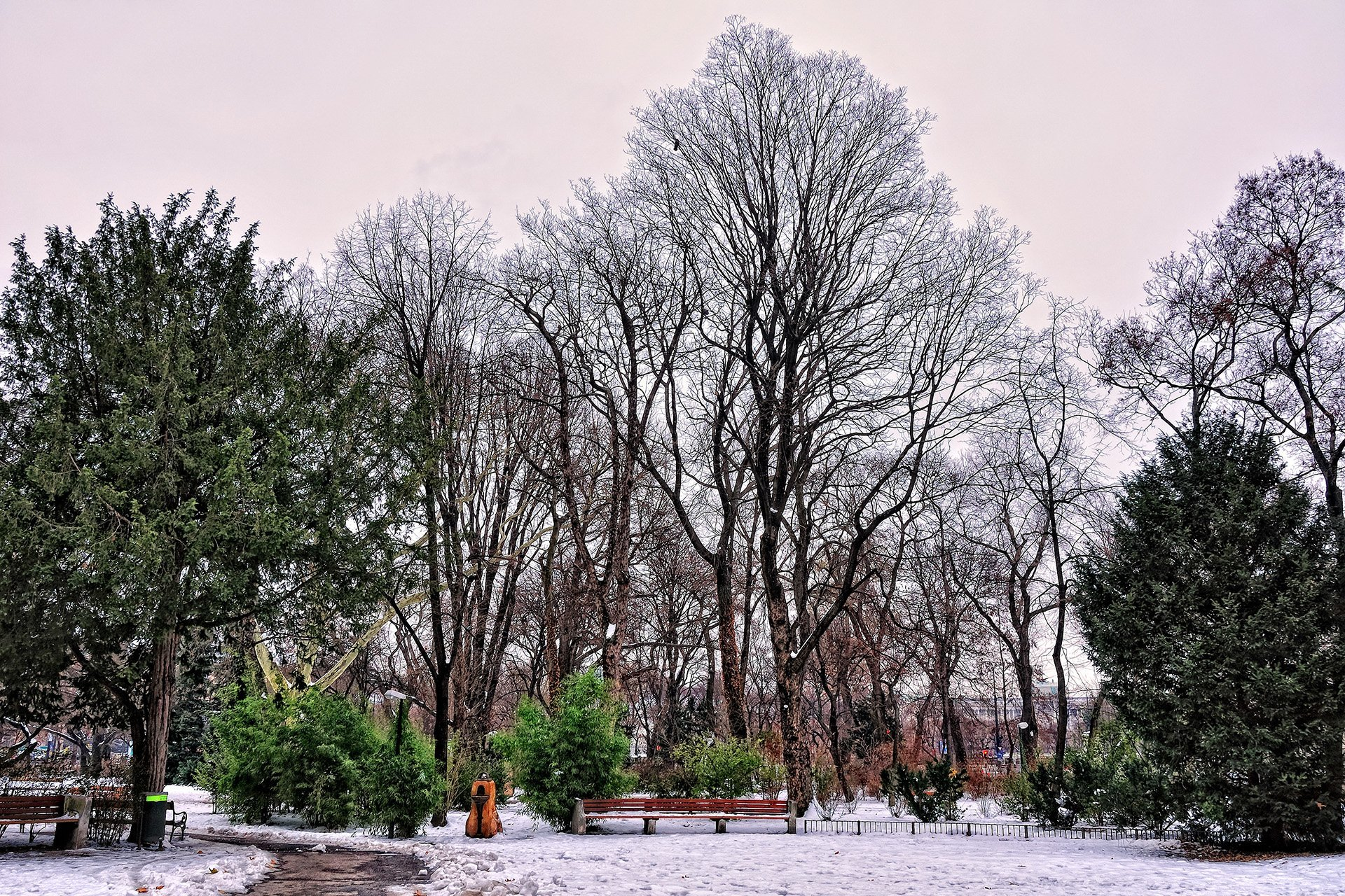 rathauspark manzarası