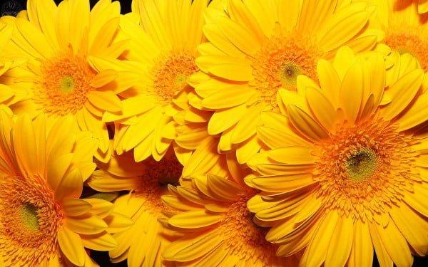 süper sarı çiçekler