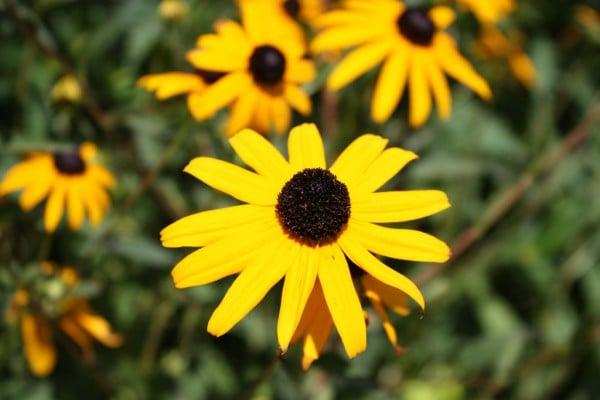 süper sarı tonlu çiçek