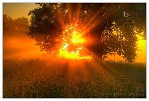 süzülen güneş