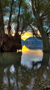 su ile ağaç 1080x1920