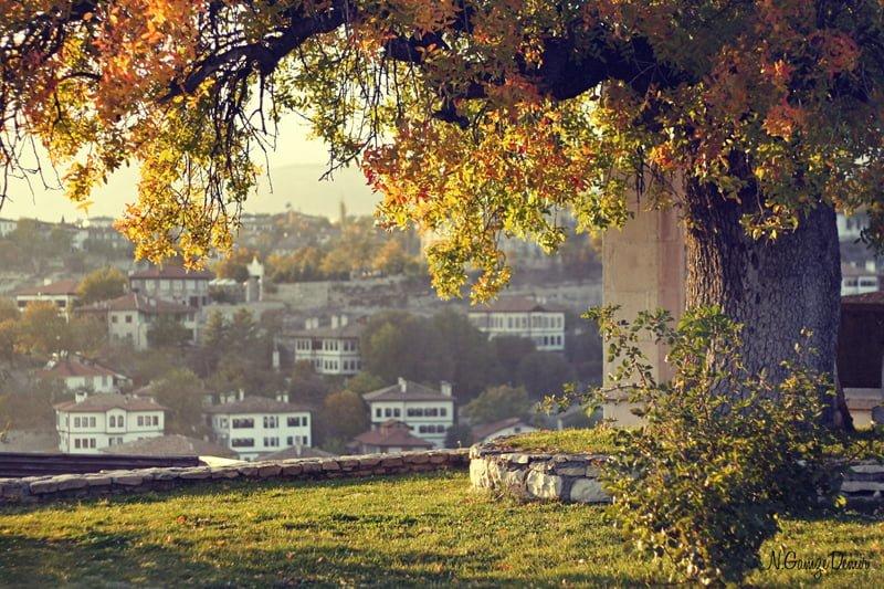 safranbolu ağaç