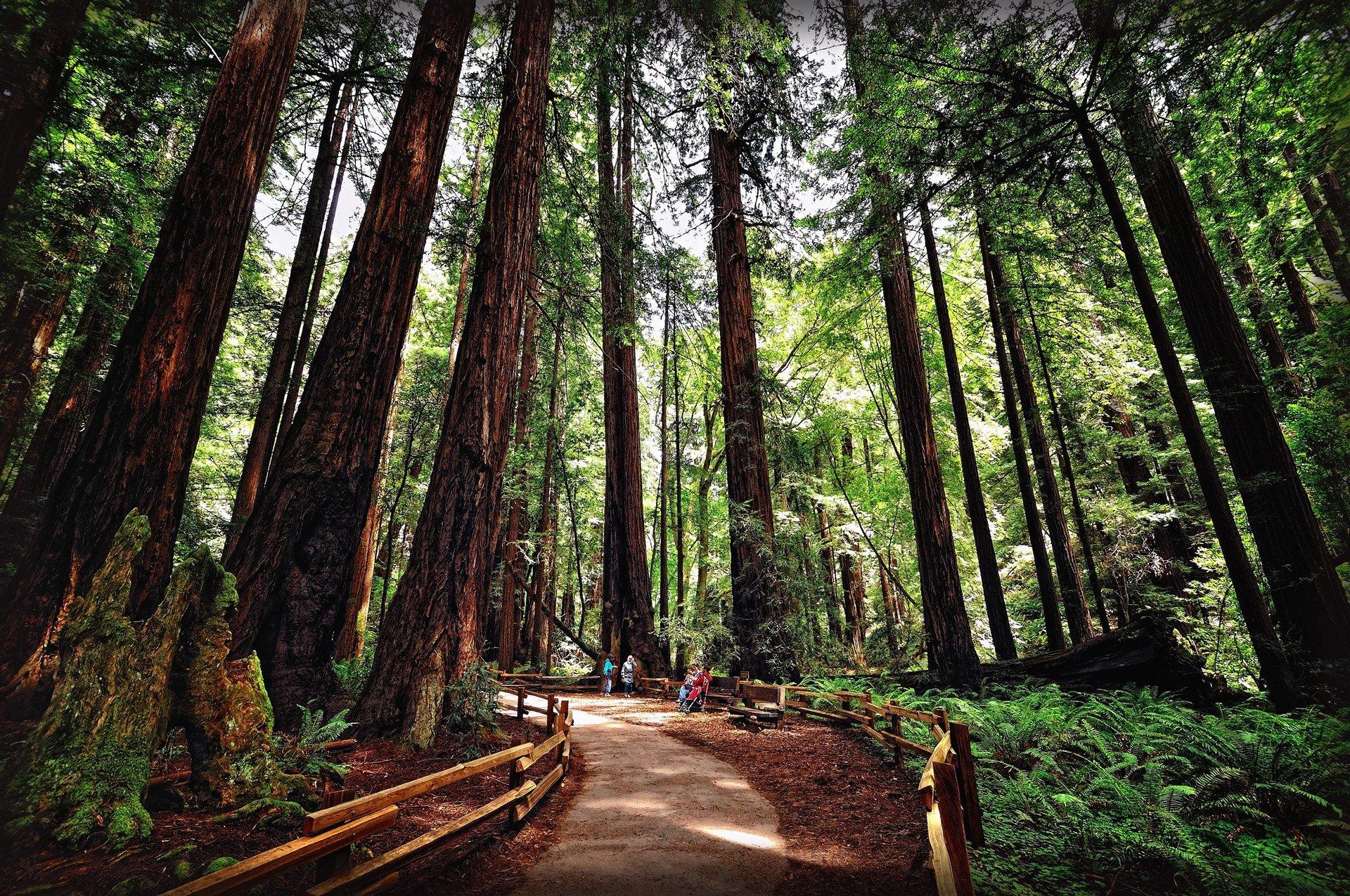 san francisco ormanları