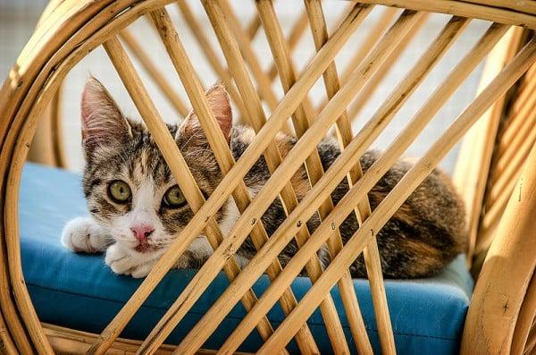 sandalye ve yavru kedi