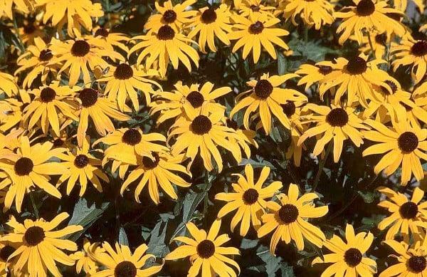 sarı çiçekli bahçe