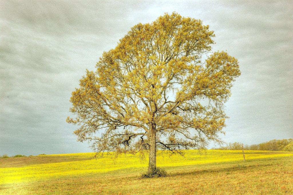 sarı arazi ve ağaç
