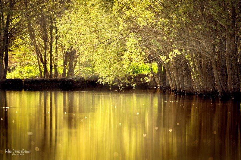 sarı göl