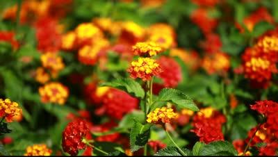 sarı kırmızı çiçekler