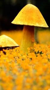 sarı mantar 1080x1920