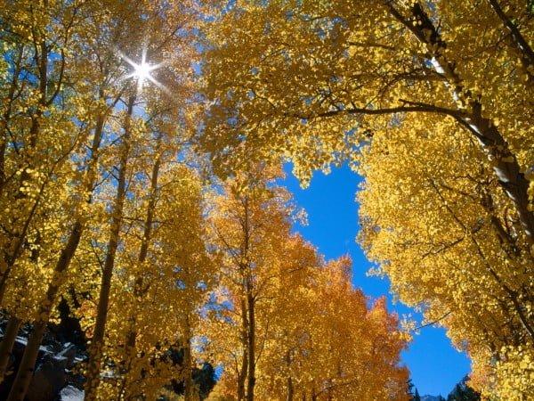 sarı yapraklı sonbahar