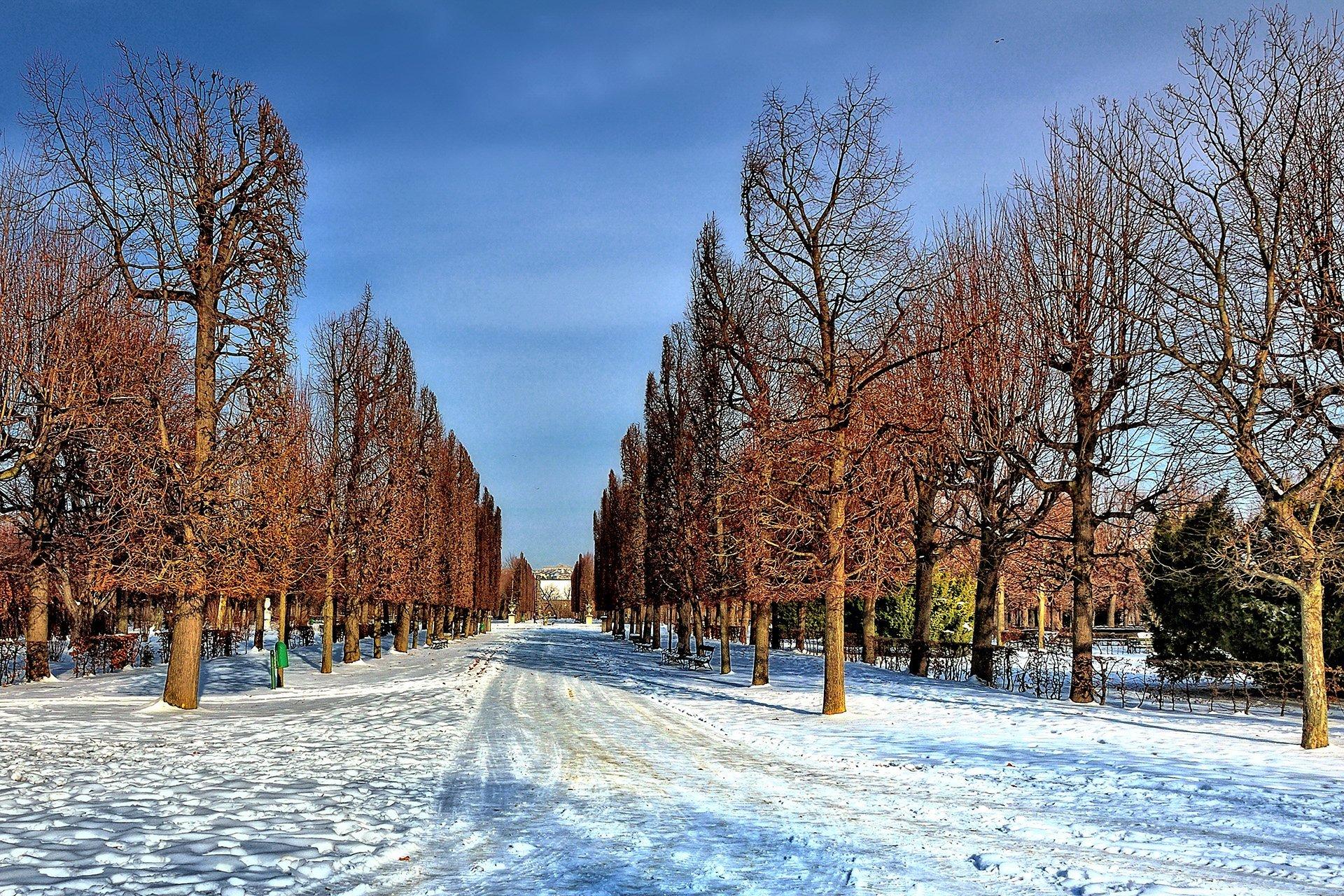 schönbrunn sarayı bahçesi – viyana