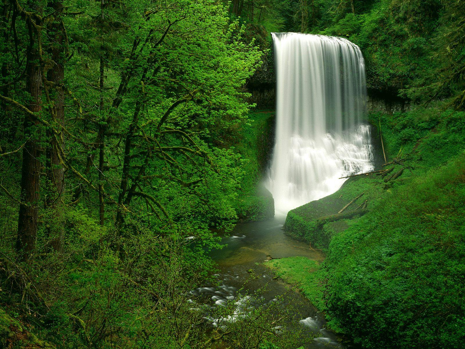 Yeşilin Kudreti ve Şelale