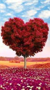 sevgi ağacı 1080x1920